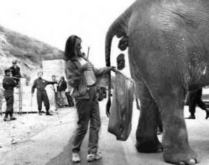Слоновий навоз