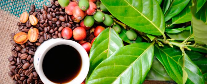 50 оттенков кофе