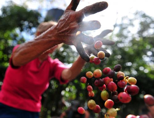 Лучший кофе в мире: краткое руководство