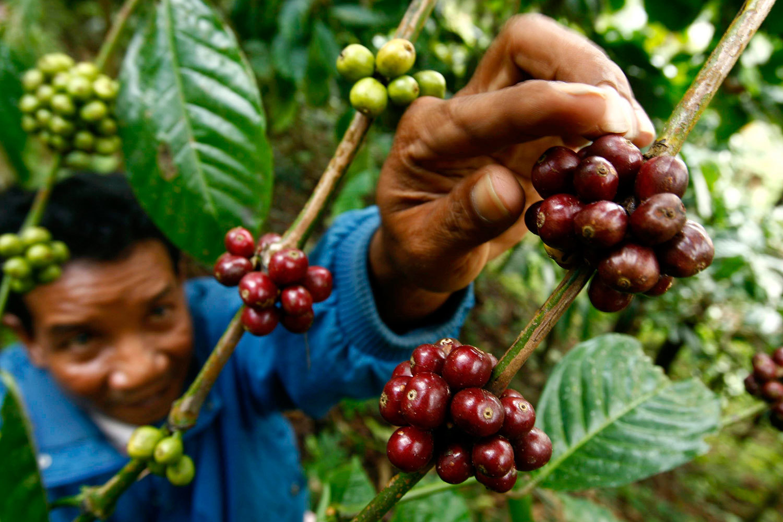 Бразилия добавляет перчинку в свои кофейные традиции