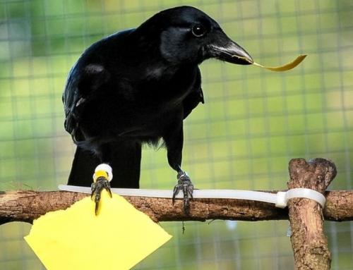 Умные вороны и вендинг