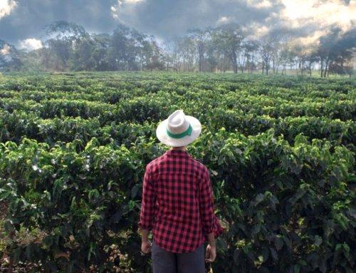 Из-за коронавируса возникает дефицит кофе в мире