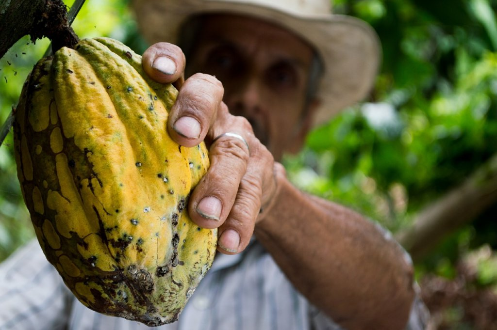 Mars Incorporated сделали выбор в пользу ГМО-какао