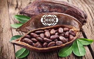 Почему подорожает шоколад Обзор рынка какао ICCO говорит о росте цен на какао.