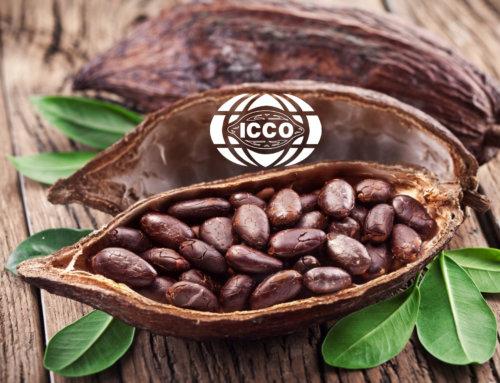 Почему подорожает шоколад? Обзор рынка какао ICCO говорит о росте цен на какао